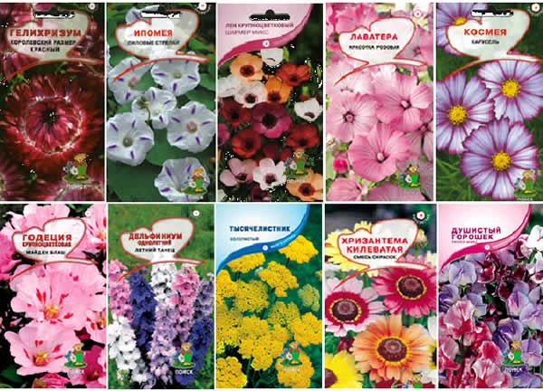 Купить семена цветы заказать букет цветов с доставкой днепропетровск